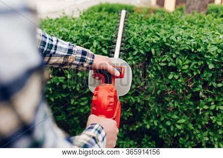 Man Cuts Hedges With A Brush Cutter. Bush Hedging Process