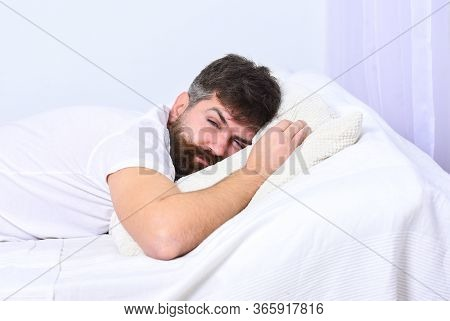 Man In Shirt Laying On Bed, White Wall On Background. Nap And Siesta Concept. Macho With Beard And M