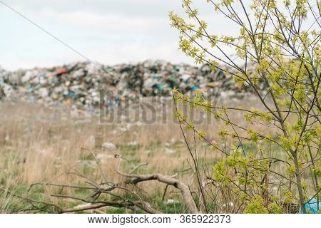 City Dump. A Huge Garbage Dump. Birds Circling Over The Garbage. Save Planet