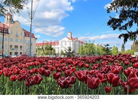 Chernihiv  / Ukraine - 11 May 2020 / Ukraine: Flowerbed Decoration. Many Tulips Grow In City. Beauti