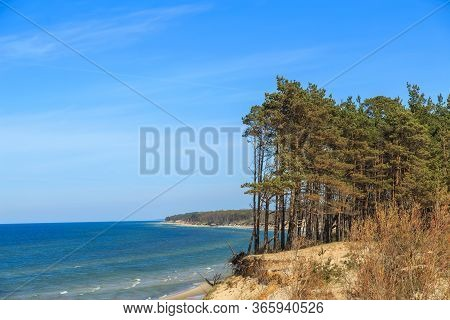 Baltic Sea Coast In Latvia. Sand Dunes With Pines And Clouds. Typical Baltic Beach Landscape