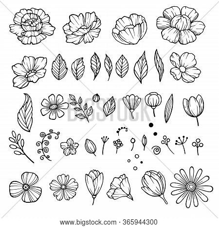 Peony Flower Elements Icons Set. Hand Drawn Set Of Peony Flower Elements Vector Icons For Web Design