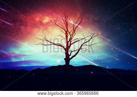 Lonely Tree On A Blue Pink Natural Backdrop, In A Starry Night With Stars Falling From Sky, Valentin