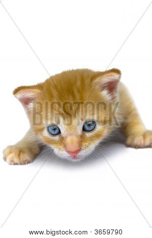 Close up of cute kitten with beautiful eyes. poster