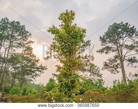 Scenery View In The Morning On Phu Kradueng Mountain National Park In Loei City Thailand.phu Kraduen