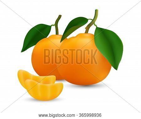 Realestic Vector Image Of Orange Fruit. Fresh Oranges Isolated On White Background Isolate The Image