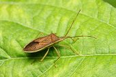 A shield bug standing on the green leaf. poster
