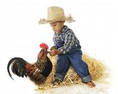 An adorable preschool farm boy hand feeding a rooster.  On a white background. poster