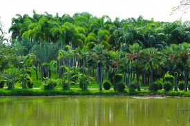 Palm Trees And Forest And Green Water Surface Of Lake In The Park