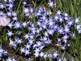 Many Blue Flowers On The Flower Bed As A Floral Background