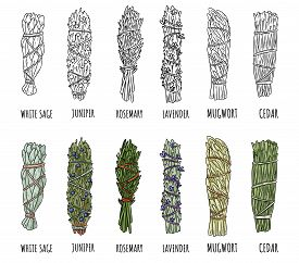 Set Of Sage And Herbs Sage Smudge Sticks Bundles. Vector Stock Hand-drawn Set Of Isolated Doodles On
