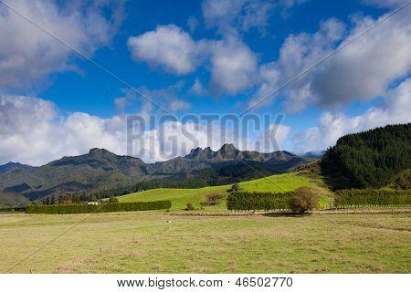 Coromandel Peninsula Nz Mountain Pasture Scenery