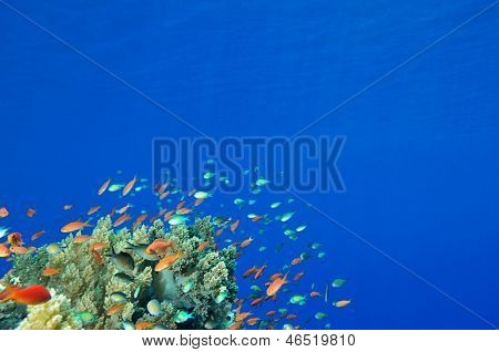 Colorful reef scene with copy space for your text