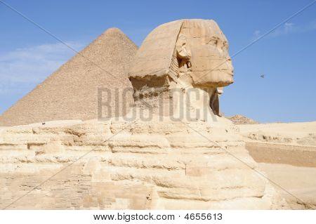 Bird Against Sphinx