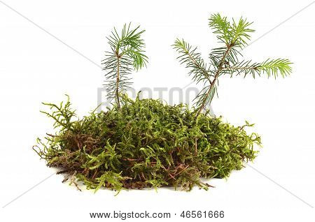 Young Plants
