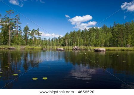 Summer Forest Lake Reflections