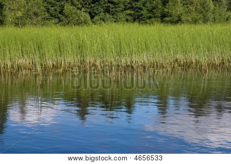 Lake Grass Side