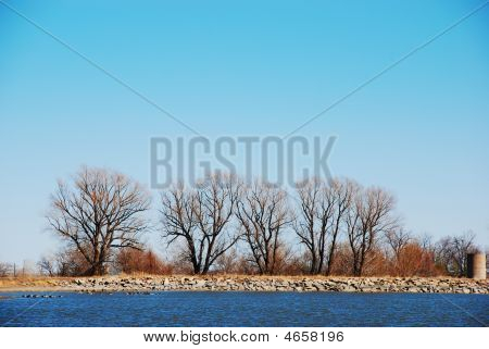 Trees At The Side Of A Lake