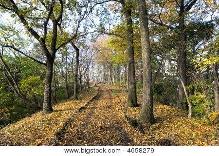 Trees And Leaves In Autumn