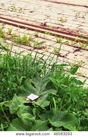 Ticket On A Public Transport, Lying In A Grass