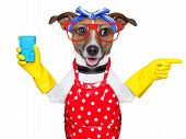 housewife dog with rubber gloves pointing and looking to the side poster