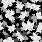 Vector seamless black and white background: a lot of falling autumn maple leaves in air. poster
