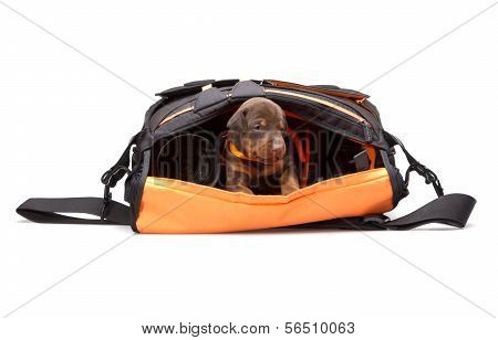 Puppy In Photografers Bag