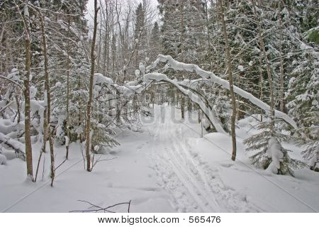 Winter Forest. Arch