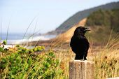 a crow perched at the beach poster