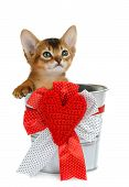 Valentine theme kitten sitting in a silver bucket with red heart isolated on white background poster