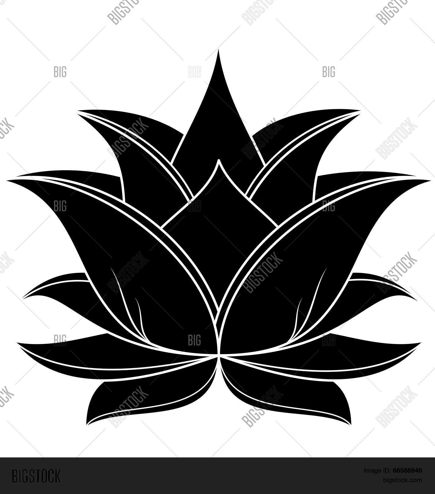 Lotus Flower Vector Photo Free Trial Bigstock