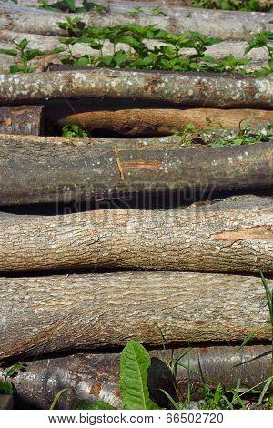 Heap Of Firewood Logs