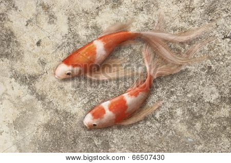 Painting A Fish On The Wall