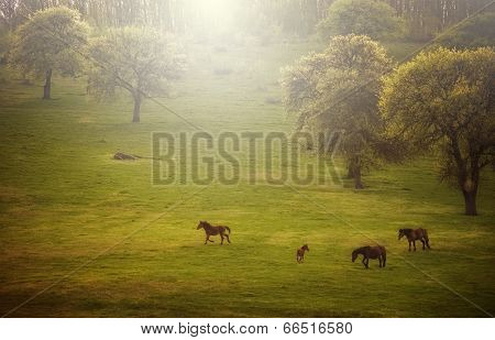 Horses grazing on meadow in spring