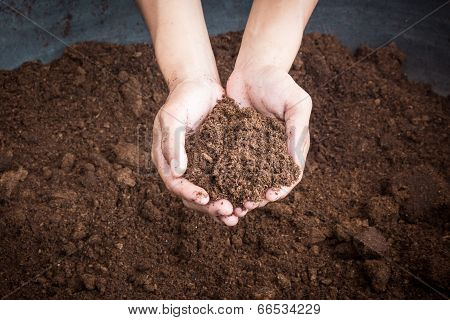 Peat Moss Soil On Hand Woman