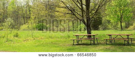 Panoramic view of lush green park and picnic tables