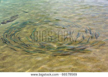 Fish Schools In The Sea, Thailand