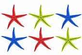 Starfish in different colors against white background poster