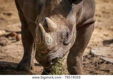 Rhino Facing