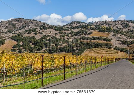 Road To The Wineries