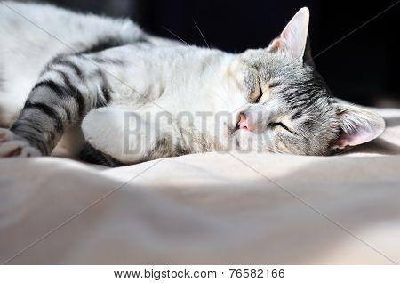 Dozy Cat