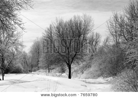 Black and white winter photo