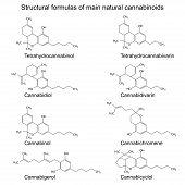 Chemical formulas of natural cannabinoids: tetrahydrocannabinol cannabidiol cannabinol cannabigerol tetrahydrocannabivarin cannabidivarin cannabichromene cannabicyclol 2d illustration vector eps 8 poster