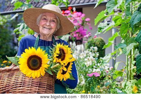 Happy Old Woman With Baskets Of Fresh Sunflowers