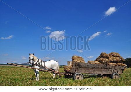 Horse with a cart loaded hay bales.