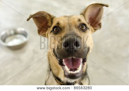 Happy Dog And Bowl