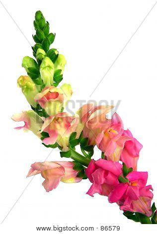 Beautiful, Colorful Delphinium Flower