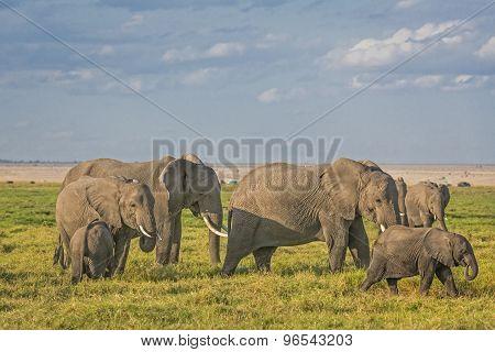 Herd Of African Bush Elephants