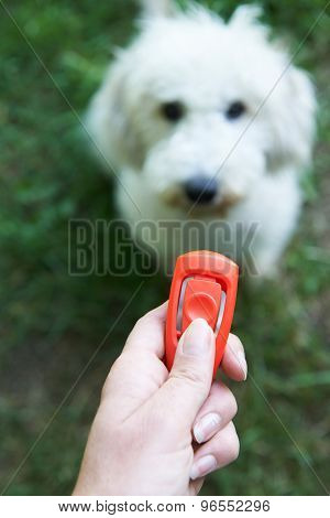 Pet Owner Training Dog Using Clicker