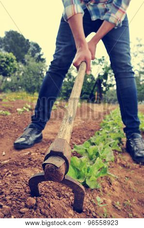 a young urbanite man digging in a garden of lettuce